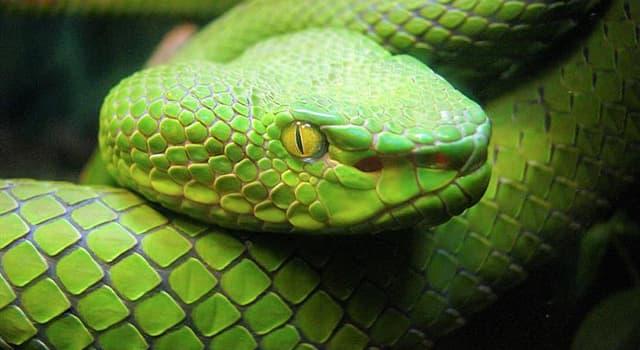 natura Pytanie-Ciekawostka: W których z poniższych krajów nie występują węże?