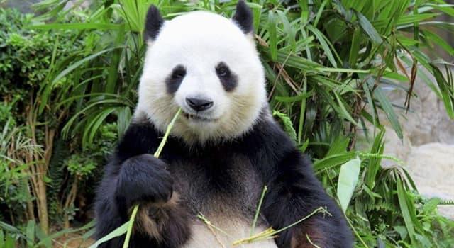 Geografia Pytanie-Ciekawostka: W którym kraju wybudowano farmę solarną, która wygląda jak panda?