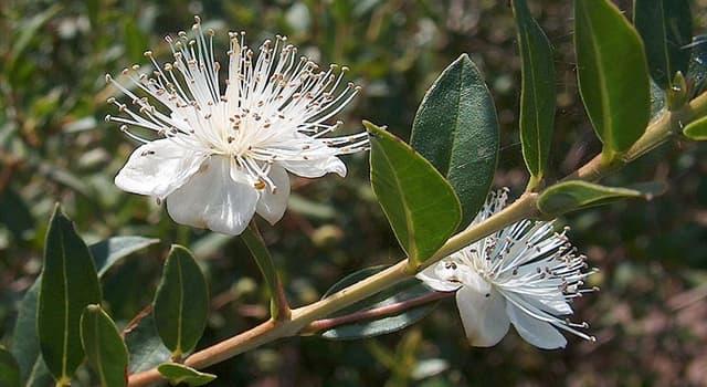 """natura Pytanie-Ciekawostka: W którym kraju znalazłbyś piękną roślinę """"Calycolpus australis""""?"""