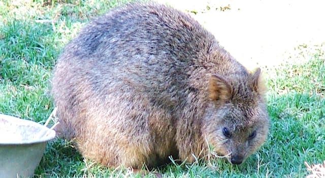 Natur Wissensfrage: Was für ein Tier ist das?