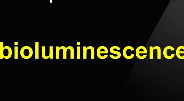 Wissenschaft Wissensfrage: Was ist Biolumineszenz?
