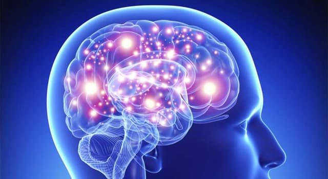 Wissenschaft Wissensfrage: Was ist der größte Teil des menschlichen Gehirns?