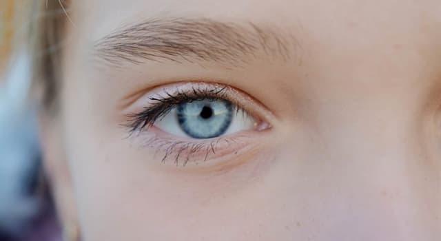 Wissenschaft Wissensfrage: Was ist der wässrige Ausfluss aus Ihren Augen oder Ihrer Nase, nachdem Sie geschlafen haben?