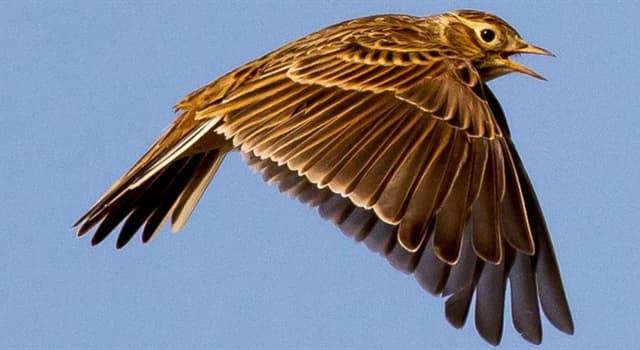 Kultur Wissensfrage: Was war der erste Vogel, den Noah aus der Arche ausfliegen ließ?