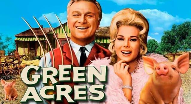Film & Fernsehen Wissensfrage: Was war der Name des Hausschweins von Mr. und Mrs. Ziffel bei Green Acres?