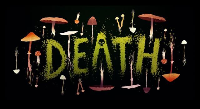 Natur Wissensfrage: Welche Art von Kreatur hat in den letzten 25 Jahren die meisten Menschen jährlich weltweit getötet?
