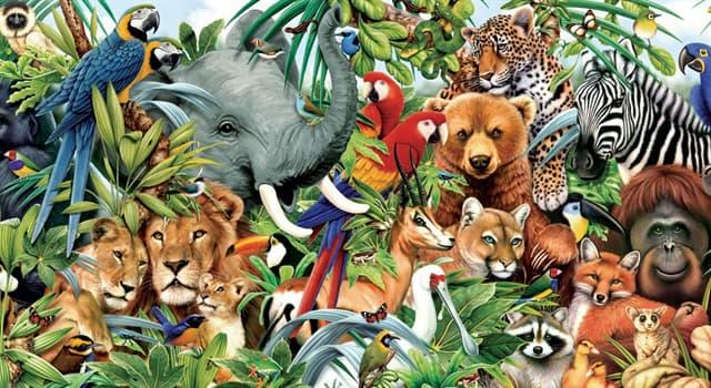 Natur Wissensfrage: Welche Art von Tier ist ein Addax?