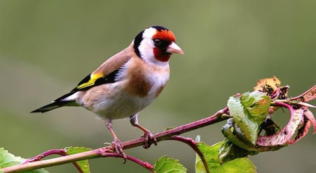 """Natur Wissensfrage: Welche flugunfähigen Vögel gehören zur Gattung """"Apteryx""""?"""