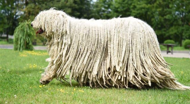 Natur Wissensfrage: Welche Hunderasse ist im Bild zu erkennen?