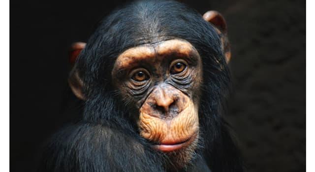 Kultur Wissensfrage: Welcher populäre Sänger hatte einen Schimpansen namens Scatter?