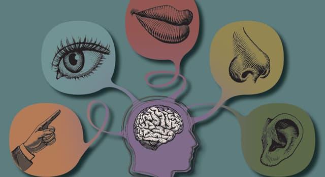 Wissenschaft Wissensfrage: Welcher Sinn fehlt, wenn man an Anosmie leidet?