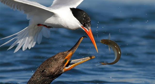 Natur Wissensfrage: Welcher Vogel nutzt seine Flügel beim Fischen als Schirm?