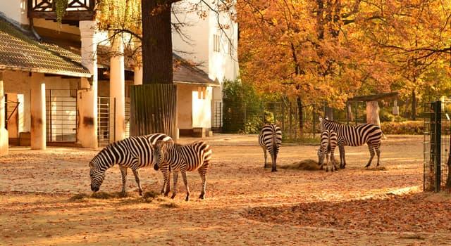 Natur Wissensfrage: Welcher Zoo hat eine der umfangreichsten Artensammlungen der Welt?