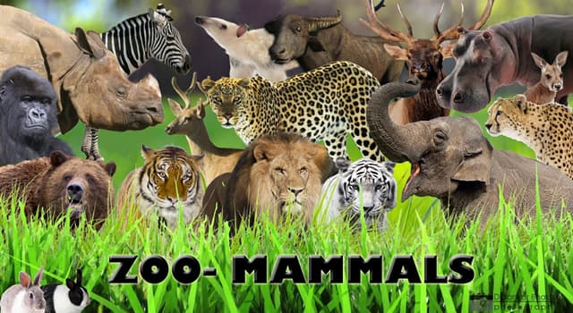 Natur Wissensfrage: Welches dieser Säugetiere ist giftig?