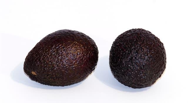 Gesellschaft Wissensfrage: Welches Land produziert die meisten Avocados?
