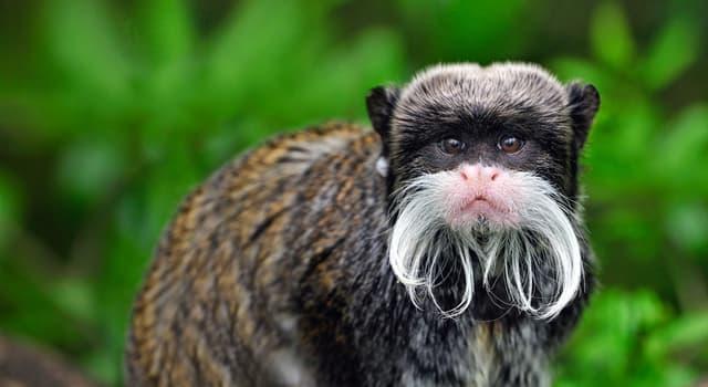 Natur Wissensfrage: Welches Tier ist auf dem Bild dargestellt?