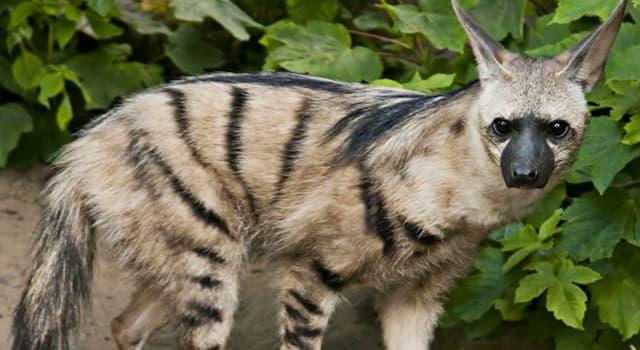 Natur Wissensfrage: Welches Tier ist auf dem Foto dargestellt?