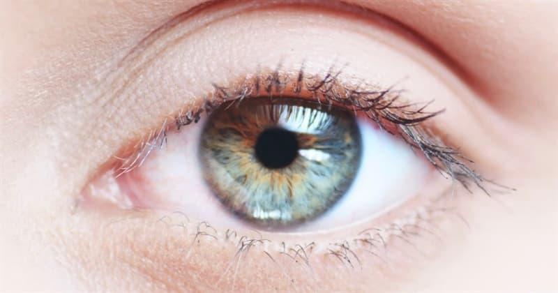 Natur Wissensfrage: Wie heißt die durch Pigmente gefärbte Blende des Auges?