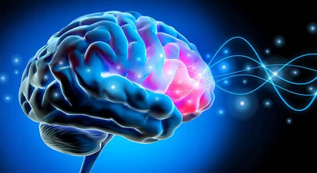 Science Trivia Question: Which food is supposed to help in the prevention of dementia?