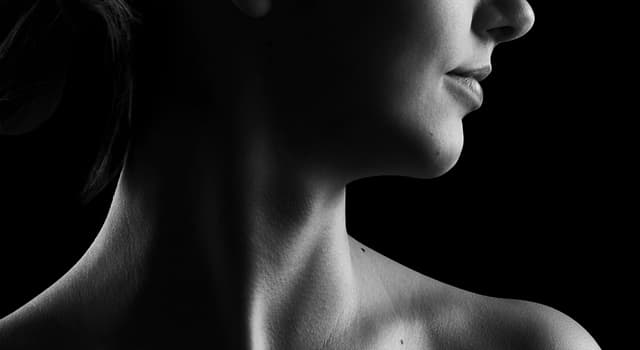 Science Trivia Question: Which major artery is located on each side of the neck?