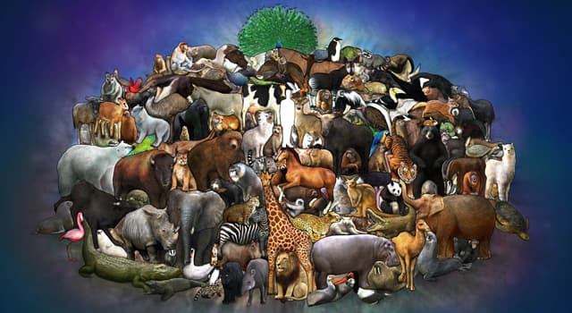 Nature Trivia Question: Which of these animals is most likely to have a 'trichobezoar '?