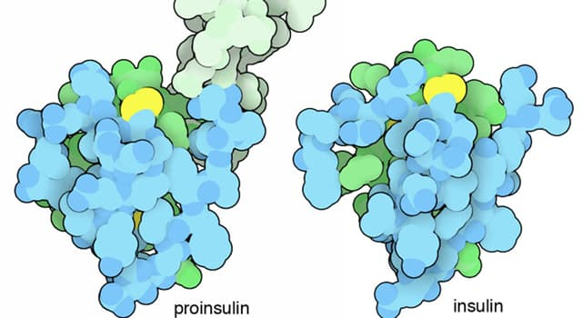 Science Trivia Question: Which of these connects insulin's A-chain to its B-chain in the proinsulin molecule?