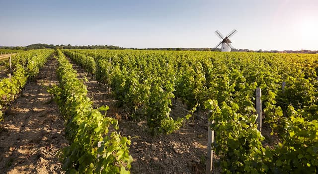 Geography Trivia Question: Which of these is one of the world's most well-known areas of wine production?