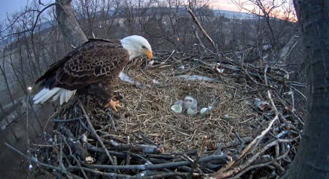 Natur Wissensfrage: Wie heißt das Nest eines Adlers?
