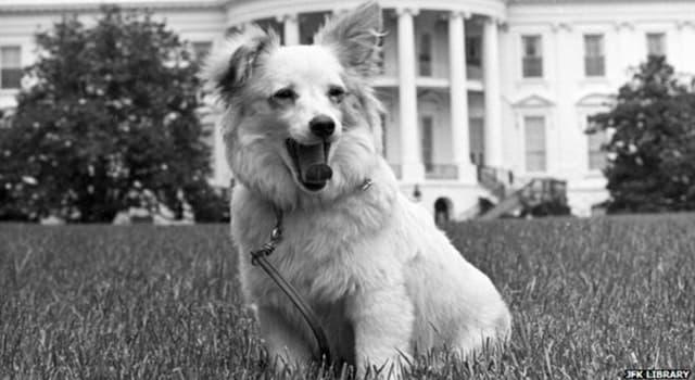Geschichte Wissensfrage: Wie hieß der Hund, den der russische Premier Nikita Chruschtschow Caroline Kennedy schenkte?