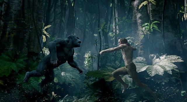 Kultur Wissensfrage: Wie hieß der weibliche Affe, der Tarzan rettete und das menschliche Baby zu ihrem eigenen machte?