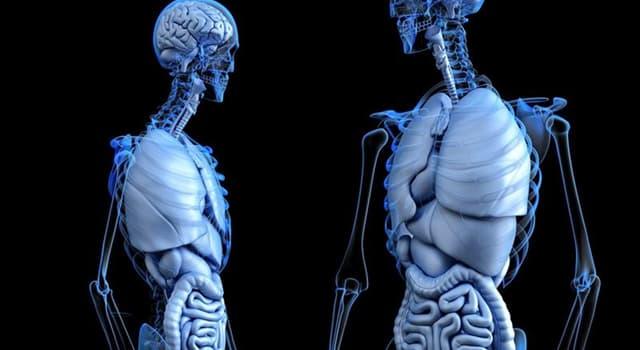 Wissenschaft Wissensfrage: Wie nennt man einen Knochenspezialisten?