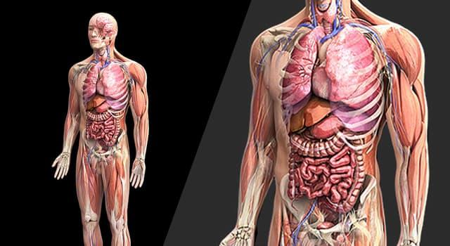 nauka Pytanie-Ciekawostka: Zakrzepica jest stanem wpływającym na które części ciała?