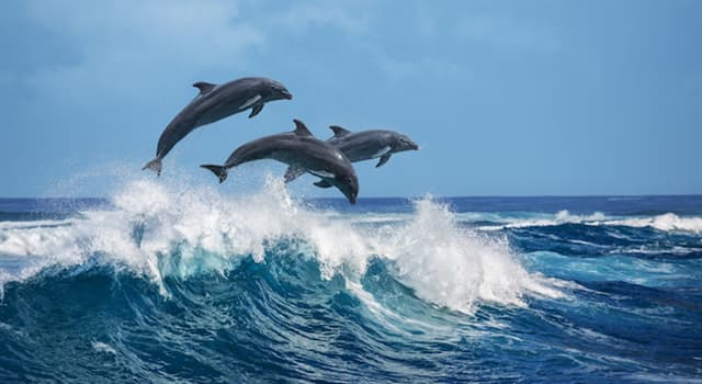 Society Trivia Question: As of 2019, are there any dolphins in the Potomac River ?