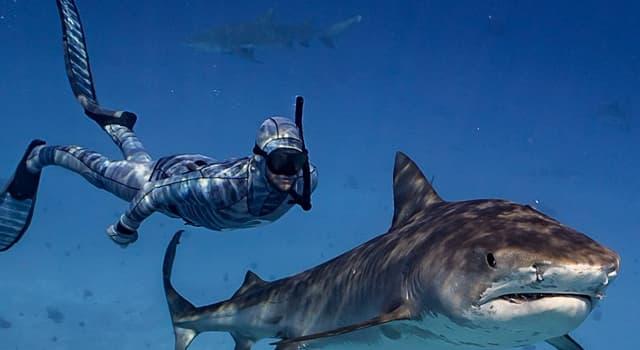 natura Pytanie-Ciekawostka: Co pomaga rekinom w polowaniu na zdobycz?