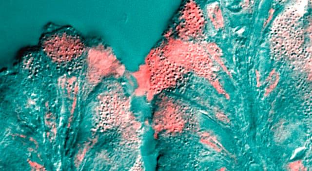 natura Pytanie-Ciekawostka: Co to mucus?