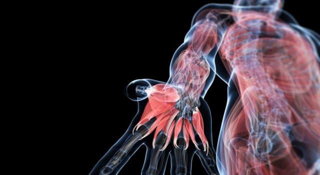 Наука Запитання-цікавинка: Де в людському організмі знаходиться потилична частка?