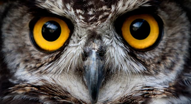 Nature Trivia Question: How do owls help agriculture?