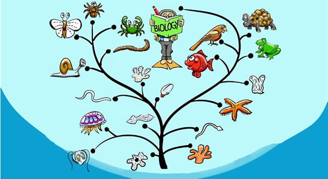 Nature Trivia Question: In terms of numbers of species, which animal group is the largest?