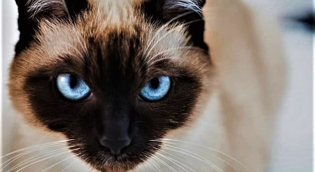 """Movies & TV Trivia Question: In the film """"Bell, Book and Candle"""", what is the name of Kim Novak's cat?"""