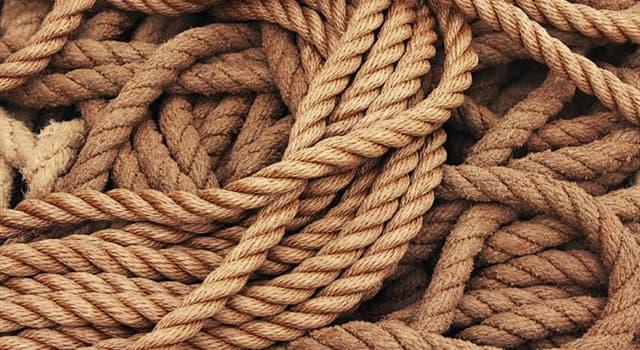 społeczeństwo Pytanie-Ciekawostka: Jak nazywa się pętla z liny zaprojektowana jako utwierdzenie do rzucenia wokół celu?