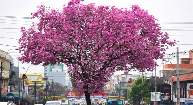 natura Pytanie-Ciekawostka: Jak nazywa się to drzewo?