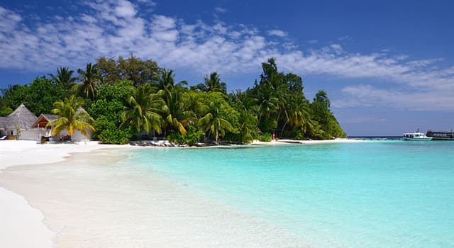 natura Pytanie-Ciekawostka: Jakie jest drzewo narodowe Malediwów?