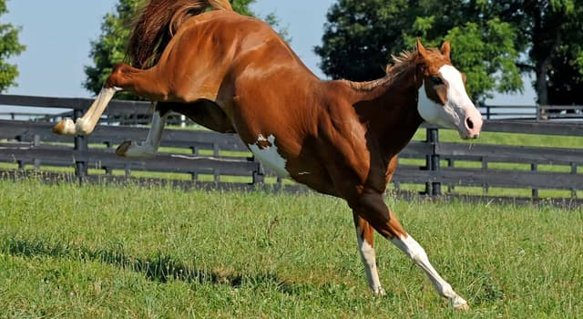 natura Pytanie-Ciekawostka: Jakie jest naturalne pożywienie dla koni?