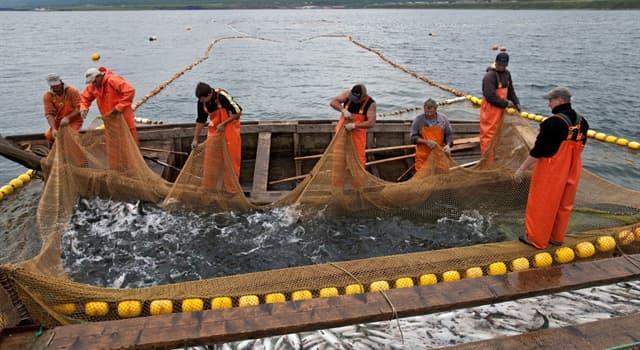 Суспільство Запитання-цікавинка: Як називається велике сетное знаряддя лову, що застосовується для лову риби у великих кількостях?