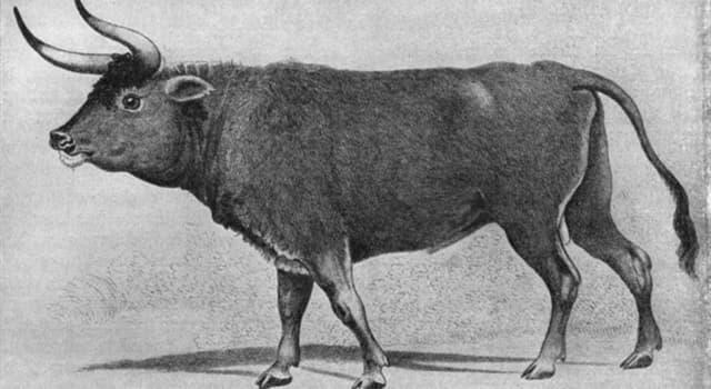 природа Запитання-цікавинка: Яке вимерла тварина зображено на картинці?
