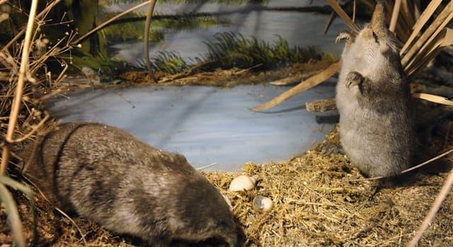 природа Запитання-цікавинка: Яка тварина з перерахованих відноситься до сімейства кротячих?