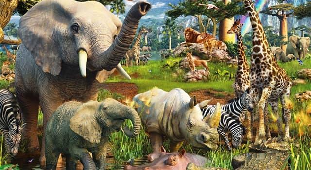 природа Запитання-цікавинка: Яка тварина прикидається мертвим в разі небезпеки?