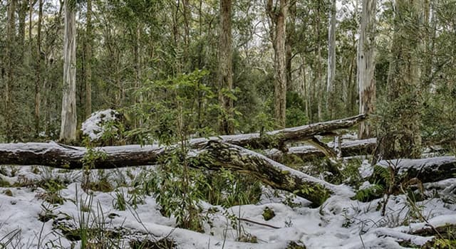 Geografia Pytanie-Ciekawostka: Kiedy zaczyna się zima w Australii?