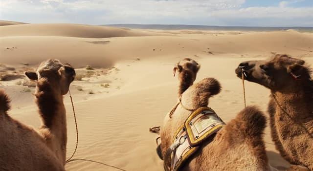 Geografia Pytanie-Ciekawostka: Która pustynia leży w Azji?