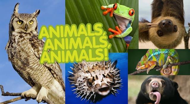 natura Pytanie-Ciekawostka: Które z tych zwierząt ma zimną krew?